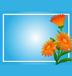 border template with orange calendula vector image vector image