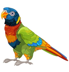 Lory parrot vector