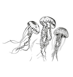 Hand drawn jellyfish  sea vector