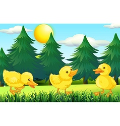 Three little ducklings in the park vector image