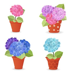 Collection of hortensia planted in ceramic pots vector