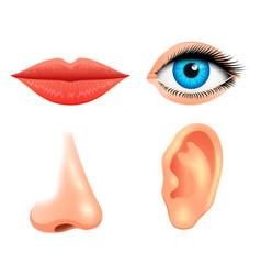 Human biology sensory organs anatomy vector