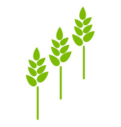 Wheat plants flat icon vector