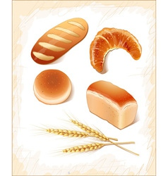 Set breads - realistic images vector