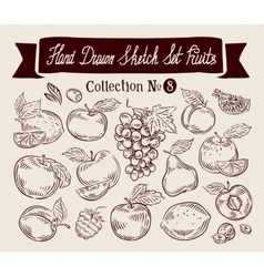 Fruits hand drawn sketch set vector