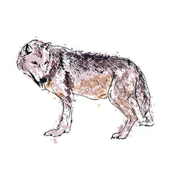 Colored hand drawing a wolf vector