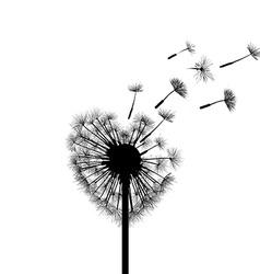 Silhouette dandelion stock vector