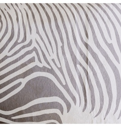 Abstract old paper background with animal zebra vector