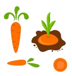 Carrot set in different styles vector image vector image
