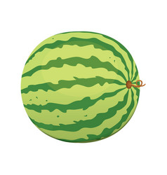 fresh and juicy red watermelon eat tropical vector image