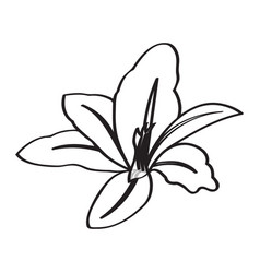 Isolated sketch flower vector