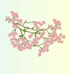 Spring flowers Cherry blossoms background vector image vector image