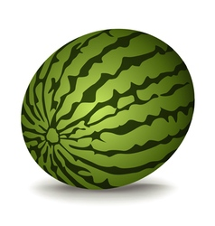 watermelon on white background vector image vector image