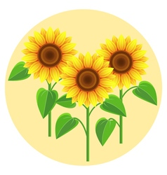 Decorative flowers sunflowers vector
