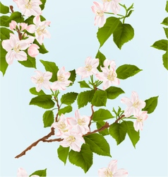 Seamless texture apple tree branch with flowers vector image vector image