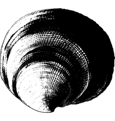 shell grunge vector image