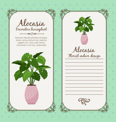 vintage label with alocasia plant vector image vector image