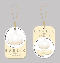 the garlic vector image
