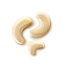 handful of cashew nuts vector image