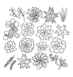 Graphic succulent collection vector