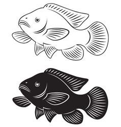 tilapia fish vector image