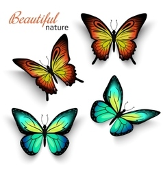 Beautiful realistic butterflies green and orange vector image vector image
