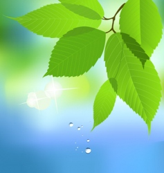 leaf with water drop vector image vector image