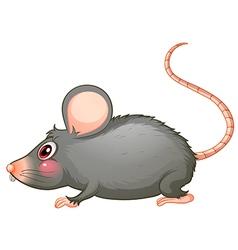 A gray rat vector image
