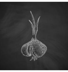 onion icon vector image