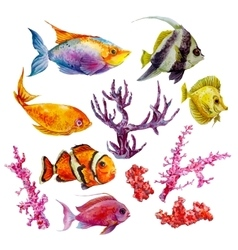 Marine set of watercolor tropical fish vector