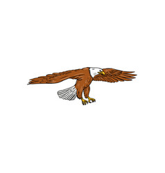 Bald eagle swooping drawing vector