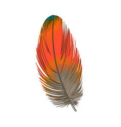 hand drawn smoth orange tropical exotic bird vector image vector image