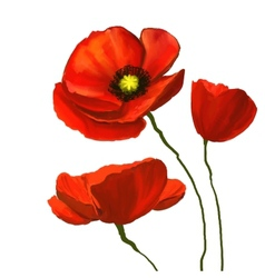 Poppies hand drawn painted vector