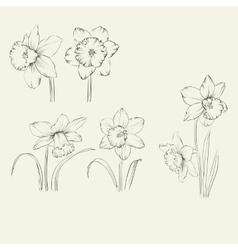 Spring flower set vector image vector image