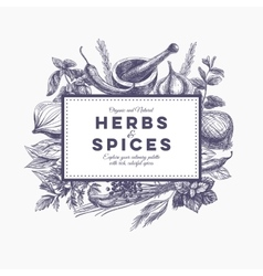 background with hand drawn herbs and spices vector image
