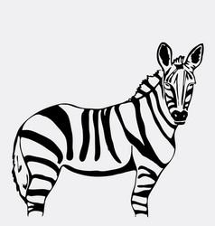 hand-drawn pencil graphics zebra vector image vector image