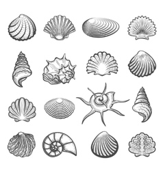 Hand drawn sea shell set vector image