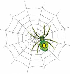Spider on a web illustration vector