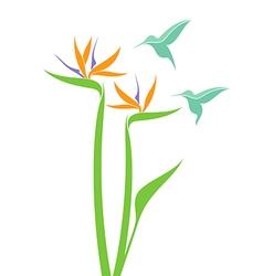 Strelitzia and hummingbird vector image