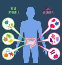 Intestinal flora gut health concept with vector
