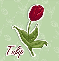 Background with flower hand drawing of a tu vector