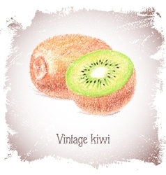 Vintage card with kiwi vector