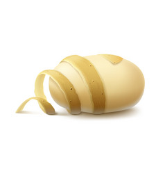 Yellow raw peeled potato with twisted peel vector