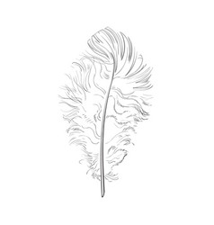Hand drawn tender fluffy black and white bird vector