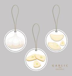 The garlic vector
