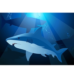 Shark swimming under the sea with sunlight vector