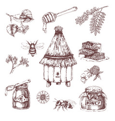 honey elements hand drawn set vector image