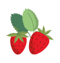 strawberry sweet vitamin nature vector image