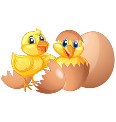 Two little chicks hatching eggs vector