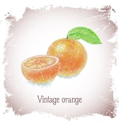 Vintage card with orange vector